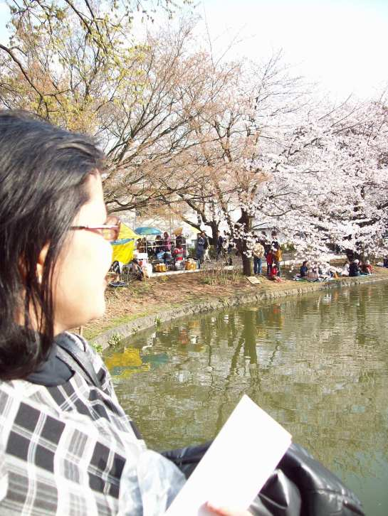 "Spring in Japan is usually highlighted by the blooming of the cherry blossom or ""Sakura"" trees."